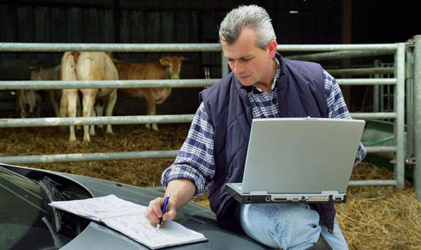 План по открытию бизнеса молочной фермы