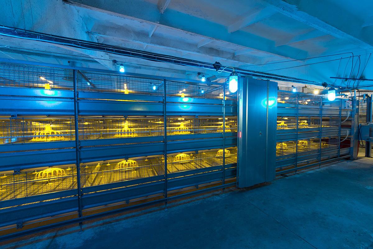 Производственное помещение для разведения кур бройлеров