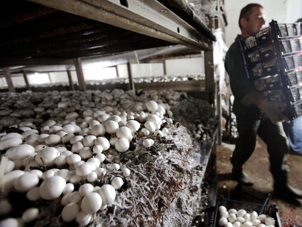 Бизнес план производства грибов с нуля