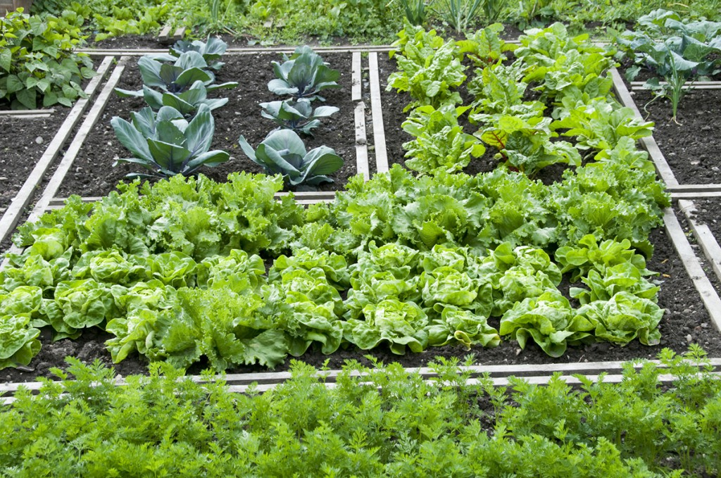 Выращивание зелени в коробах 41