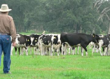 Эффективный бизнес план молочной фермы на 10, 20, 50 или 100 голов с прибыльными направлениями производства