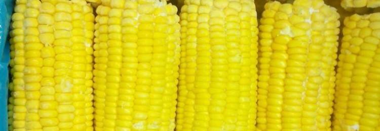 Идеи для стартапа: бизнес-план по продаже вареной кукурузы