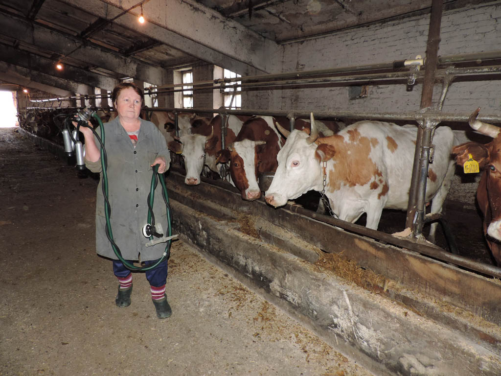 Эффективный бизнес план молочной фермы с прибыльными направлениями производства
