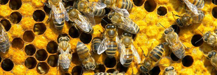 Бизнес план по пчеловодству
