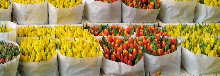 Бизнес план выращивания цветов принципы инвестиционного бизнес плана