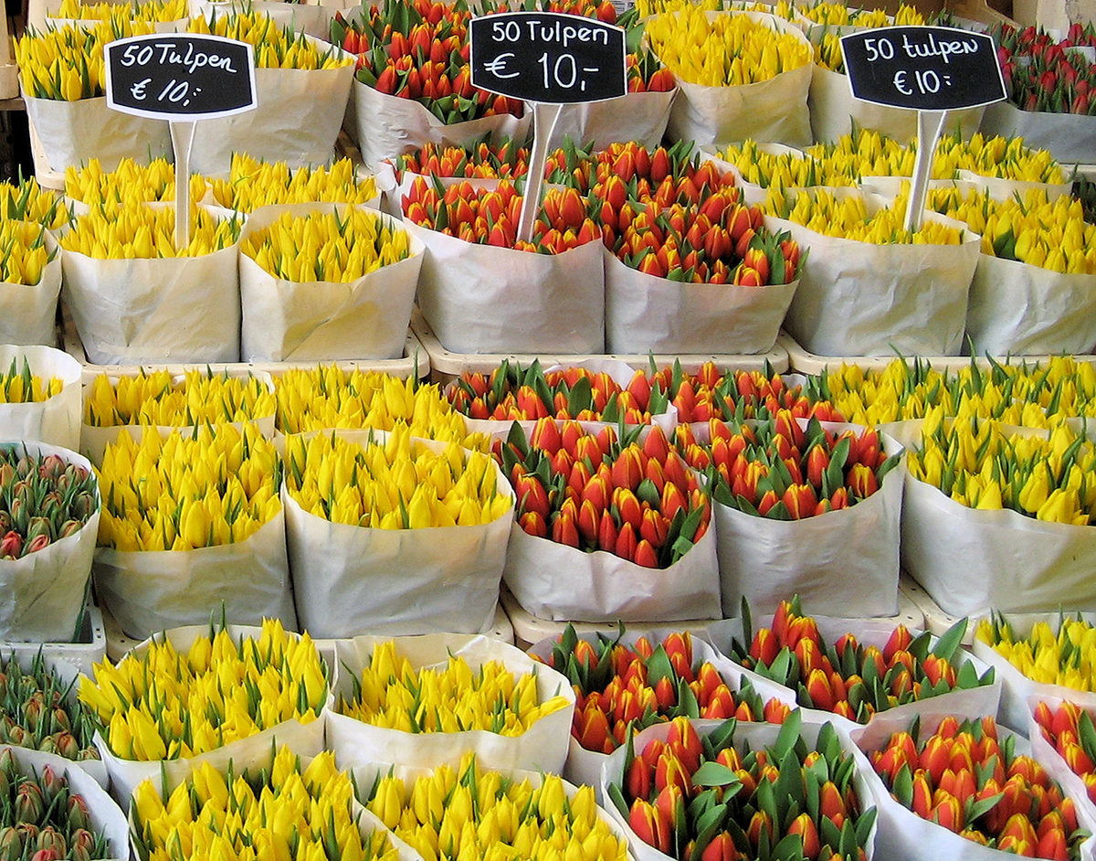 Бизнес план по выращиванию цветов