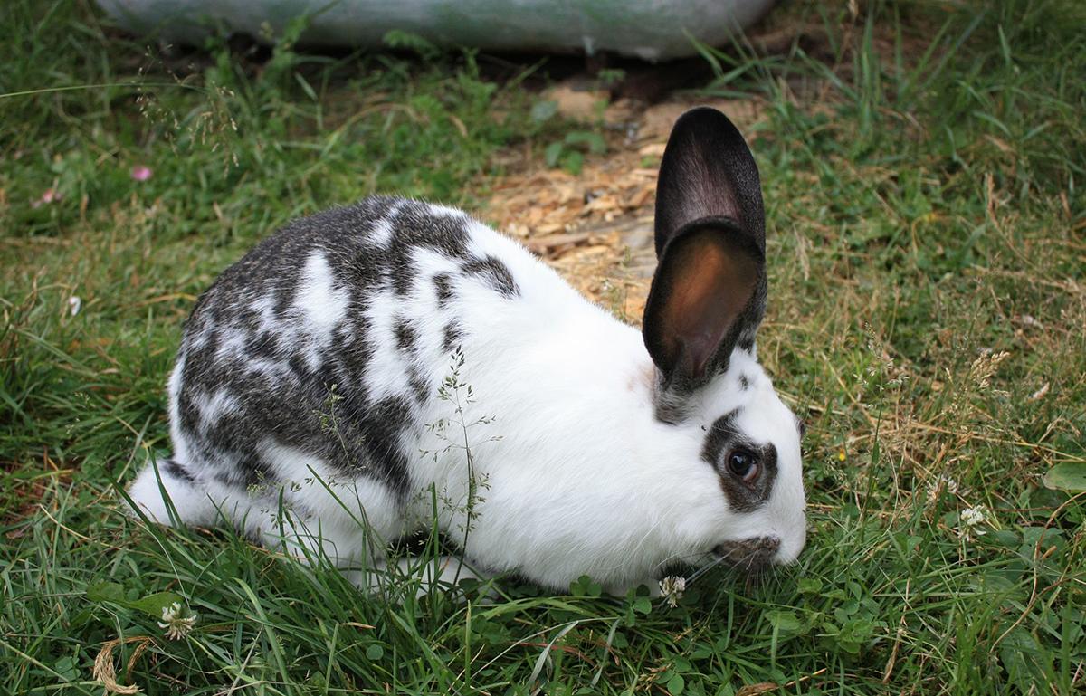 Бизнес план по разведению кроликов: советы по выращиванию и содержанию