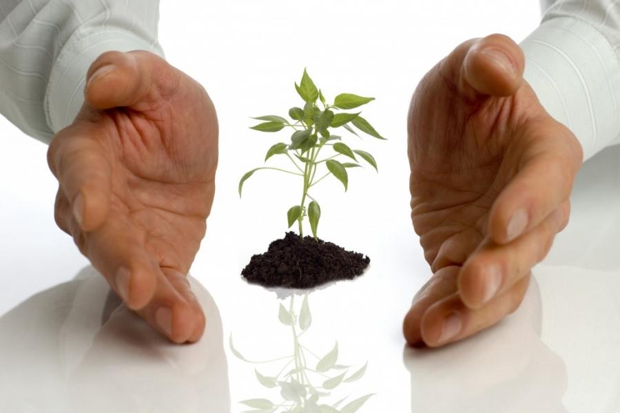 Как получить субсидии для бизнеса: условия и пошаговый план