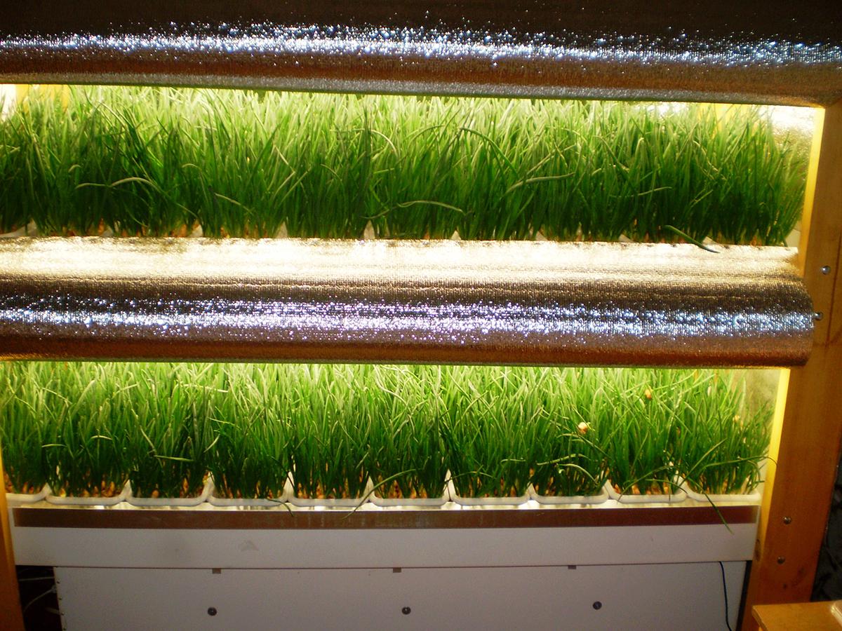 Изображение - Выращивание укропа и петрушки как бизнес vyrashhivanie-zeleni-kak-biznes3